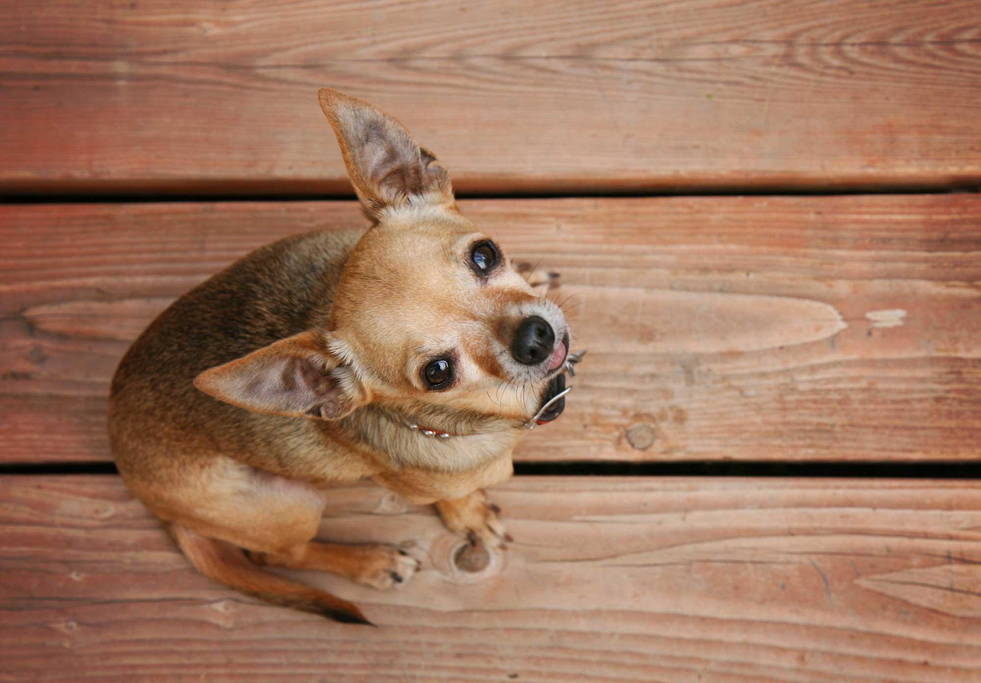 dog-on-deck